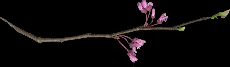 Flower Purple (1)